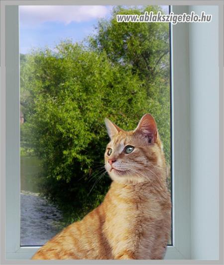 Feri cica. - 2. kép