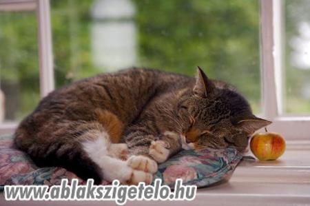 Mirci cica. - 3. kép
