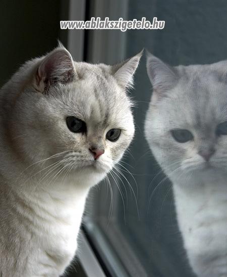 Mirmur cica. - 6. kép