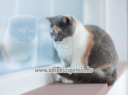 Kacor cica. - 8. kép